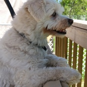 timbit sitting on swing enjoy the weekend