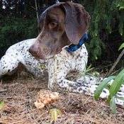 True Morel Hunter