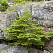 Tree & Rocks: Bonded