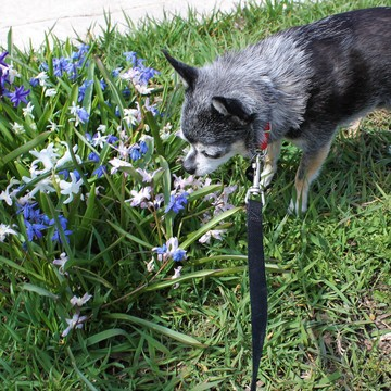 Melvin stopping to smell the flowers along the way