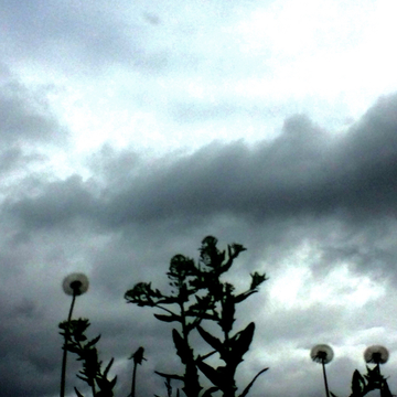 Little plants feared to see black clouds