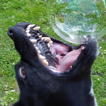 caught my girl getting a bubble