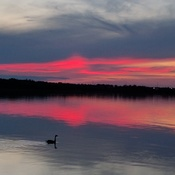Lone Goose at sunset