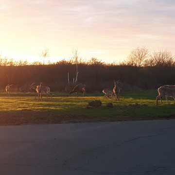 Evening Visitors outside our Motel.