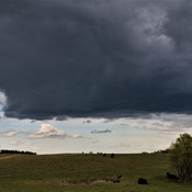 Wall cloud over cows