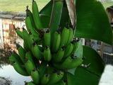 les bananes - Delray Beach, FL