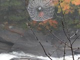 Like a Web over troubled water... - Onaping Falls, ON