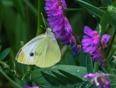 Moth - Mississauga, ON