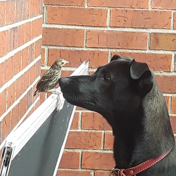 Lily and the bird