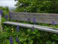 Lupin bench, Elliot Lake. - Elliot Lake, ON