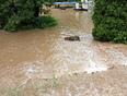 Nottawasaga River in backyard - Hockley Valley, ON