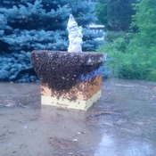 Beehives floating away in St Jacobs - 23June17