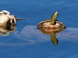 Painted turtle and Spider. - Kamloops B.C.