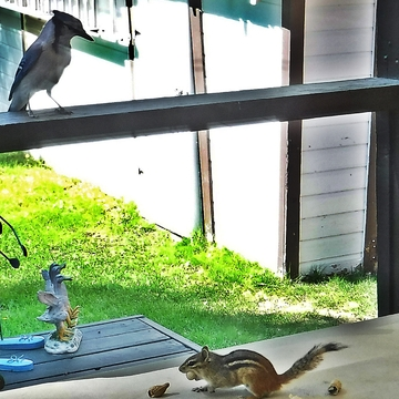 Chippy & Blue Jay...Sharing Lunch