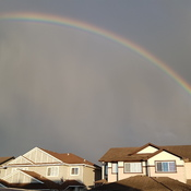rainbow over spruce grove