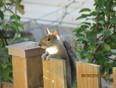 Écureuil curieux, chat alerte