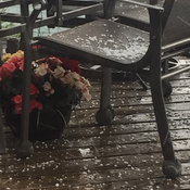 Hail hits just prior to noon in Thornbury.