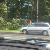 Lighting hit tree in Oshawa, ON