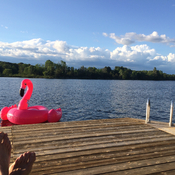 Flamingling at the lake
