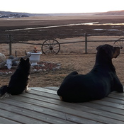 pups enjoy sunsets too