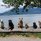 The pack at Spanish Banks