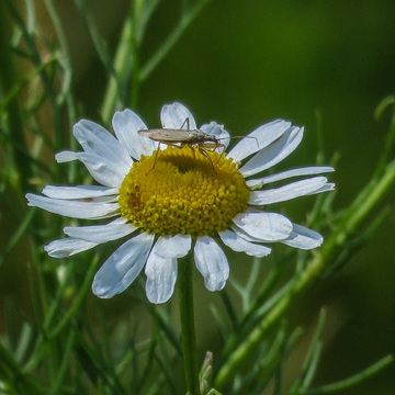 Daisy and a bug