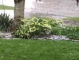 Hailstorm - London, ON, CA