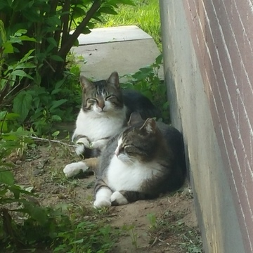 Twin Feral cats