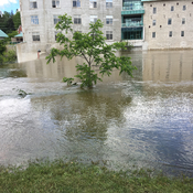 Grand river flood