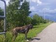 Raphie - Allanburg, ON