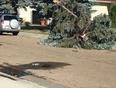 Down Tree - Edmonton, Alberta, CA