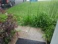 hail in Renfrew - Renfrew, ON