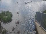 All family duck - Navan, ON