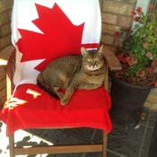 Hoping for an equally beautiful Canada Day!