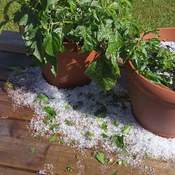 Hail/Hail Damage in Bridlewood, Kanata, ON