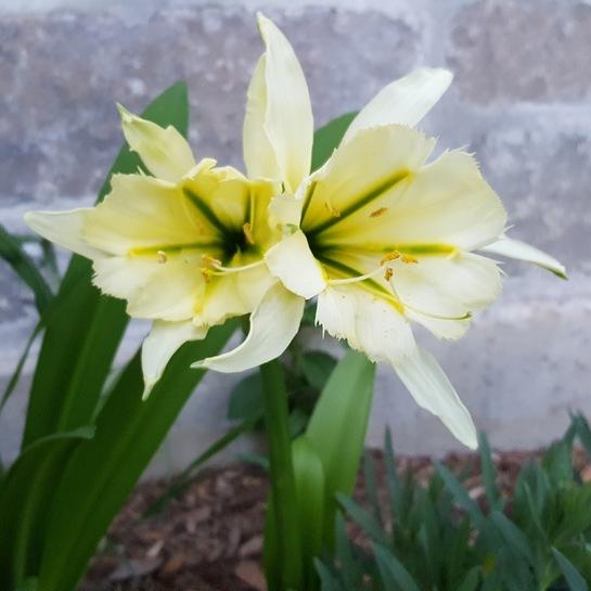 fleurs en beauté Mirabel, QC