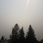 Smoky in Edmonton