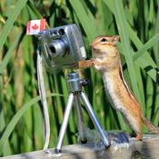 Chipmunk takes up photography!