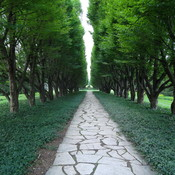 The path of Trees