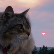 Kitty in the Sky (with a Ruby Sun)