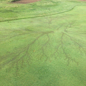 Lightning strike at Settlers Ghost golf course