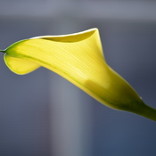 calla beauty