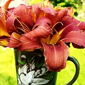 Reblooming Daylillies