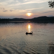 sunset swim on halfway lake