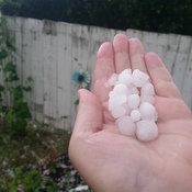 hail in red deer