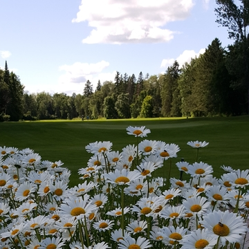 Daisies on the 9th