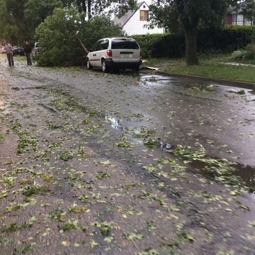 Tree fallen down on a car