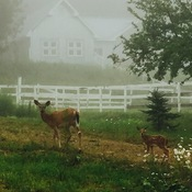 Mama and baby on a foggy morning