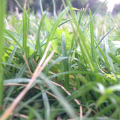 Laying in the grass...SPL