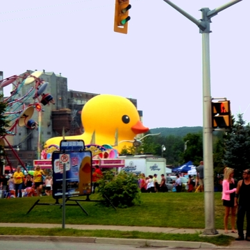 10-4 RUBBER DUCKY MIDLAND ONTARIO FOLLOW THE DUCK FESTIVAL